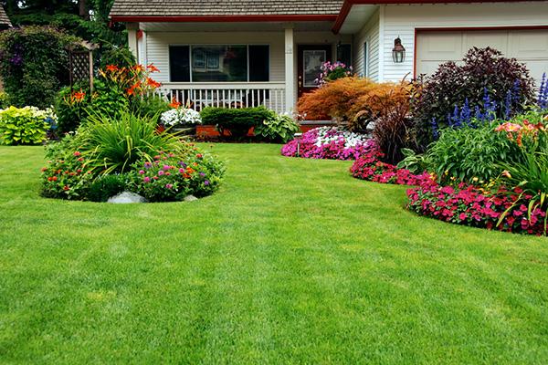 простой садовый газон