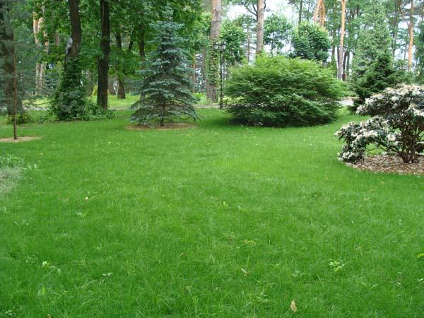 теневынослый газон